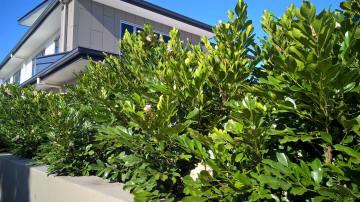 Screen Plants